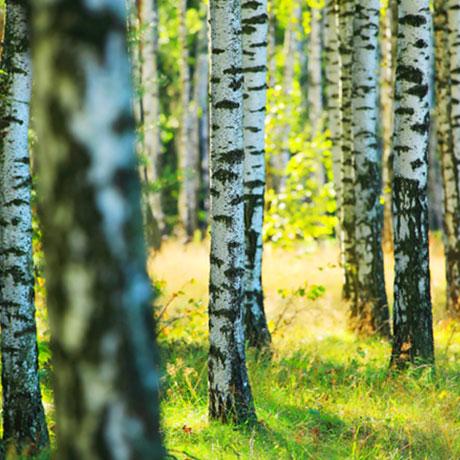 Trær og planter